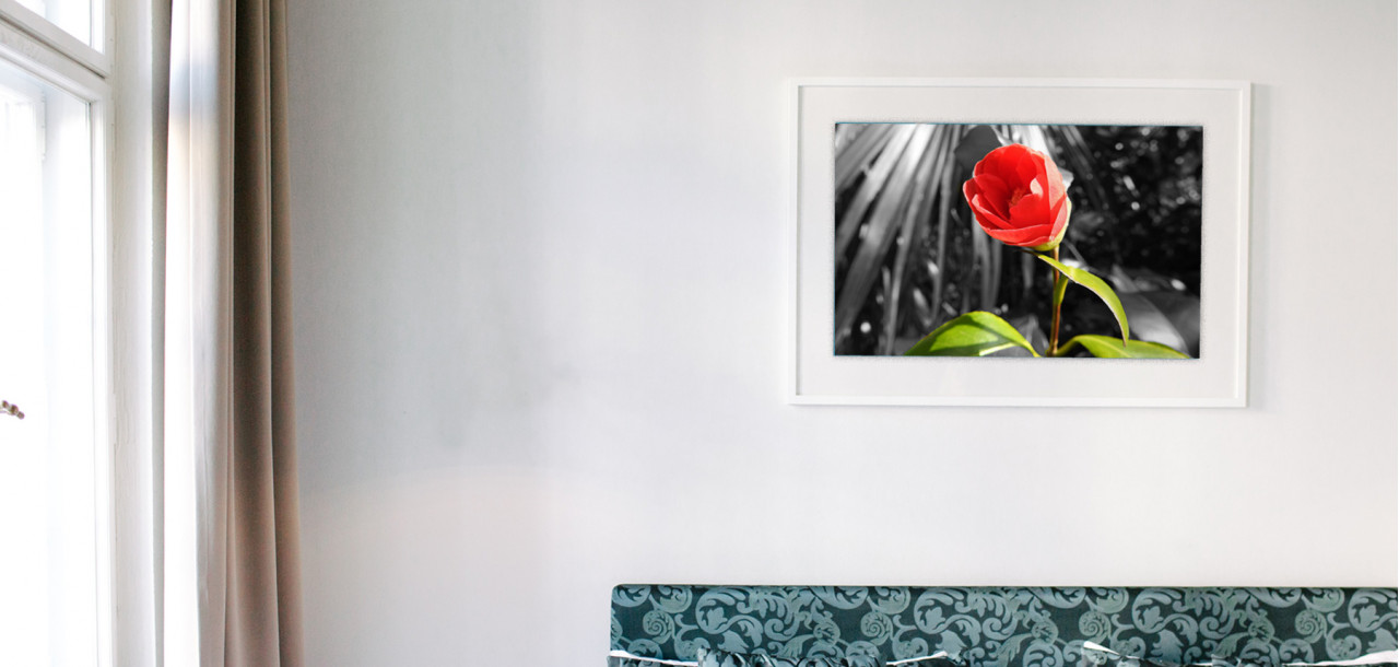 Interior wall with 101 Canvas Prints Red Rose picture hung on it
